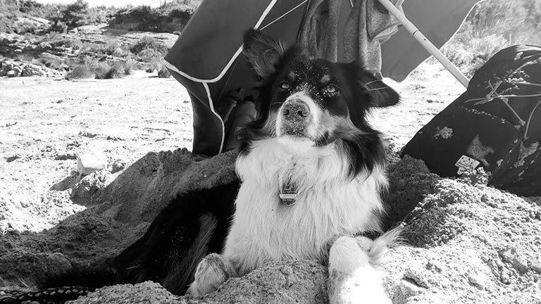 Hund am Strand-Hobby Tierfotografie