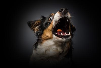 Hundefotografie Schnappschuss Shooting