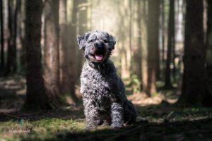 Hunde Fotoshooting Malteser Mischling Wald