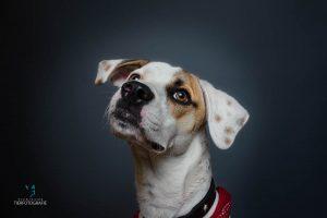 Hunde Fotoshoshoting Mischling Portrait