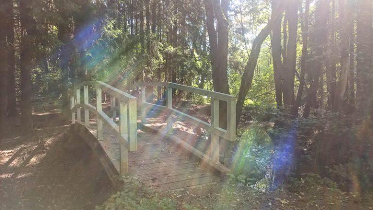 Naturpark-Schönbuch-Oase-Weil-See_3