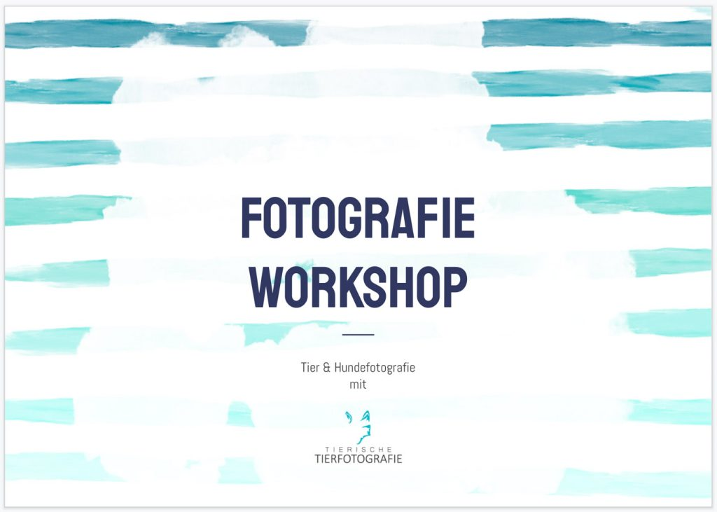Hundefotografie Workshop Deckblatt