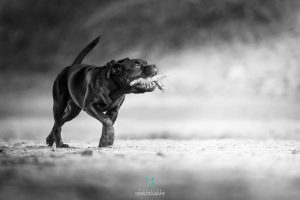 Outdoor Hundefotografie stock Staffordshire Terrier