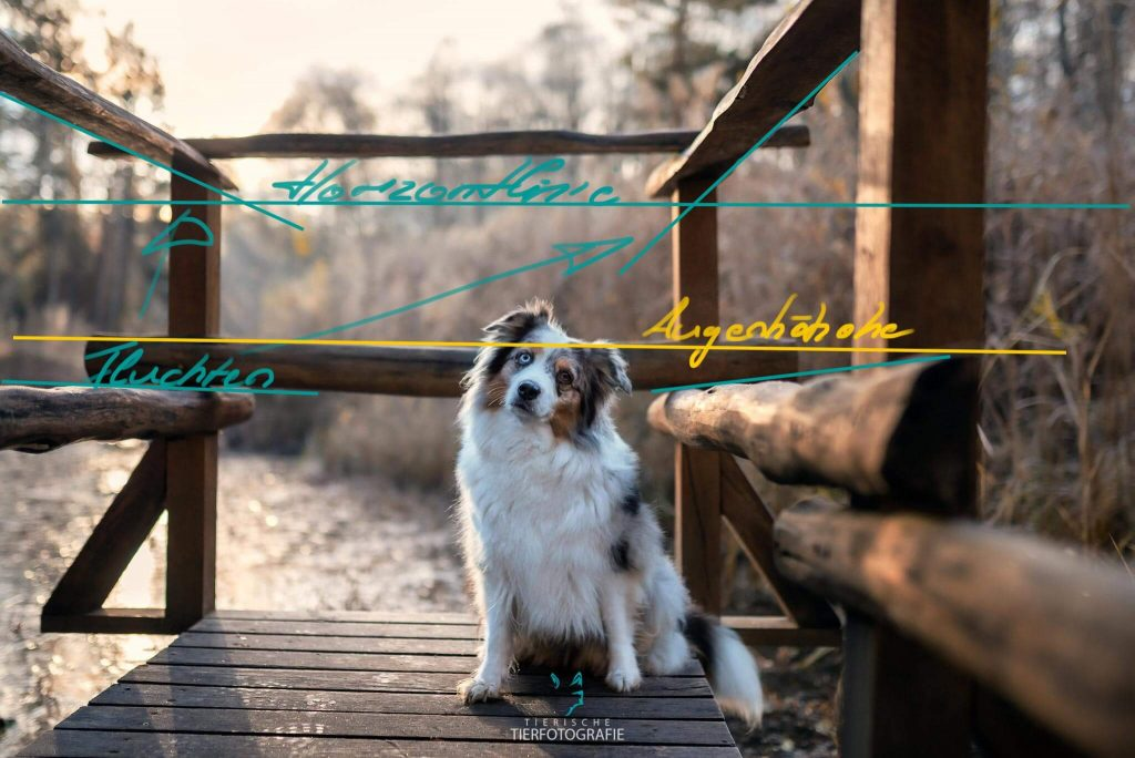 Fotografie den Hund auf Augenhöhe